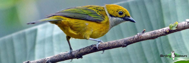 Costa Rica birding tours