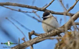 Bulgaria winter birding tours