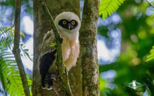 Costa Rica Birding Escape