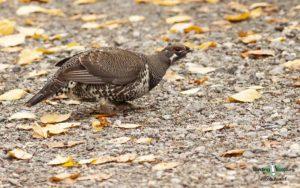 Maine birding tours