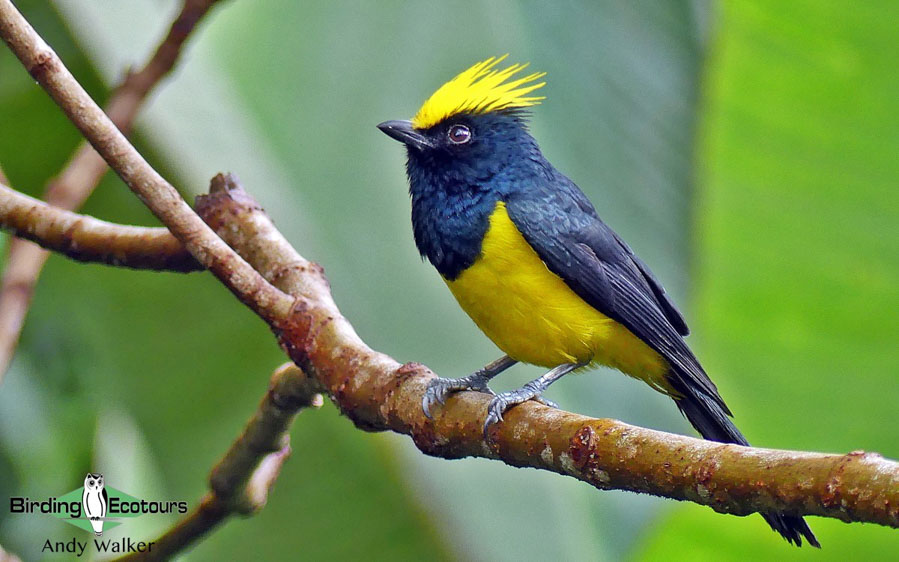 Himalayan birding tours