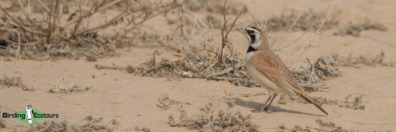 Morocco birding tours