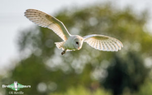 Norfolk birding tours