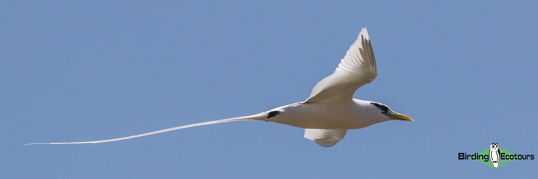 Cuba birding tours
