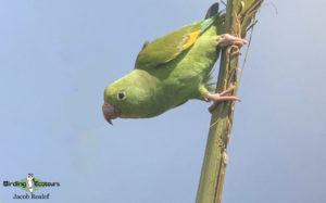 Florida birding tours