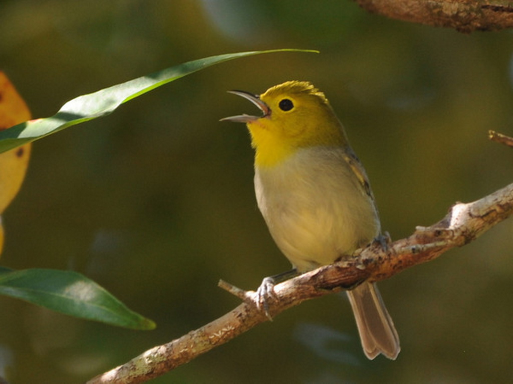 Cuban birding tours