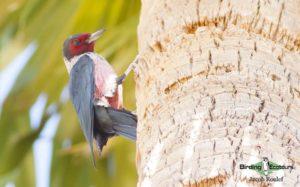 Northern Arizona birding tours