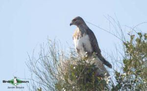 Northern Madagascar birding tours