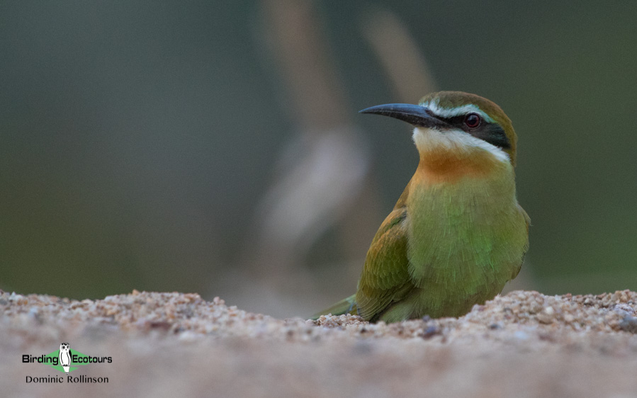 Northern Madagascar birding tours