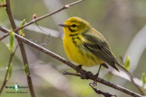 Ohio birding tours