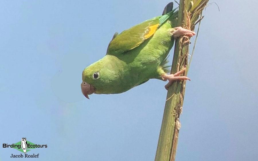 Florida Birding Trip Report