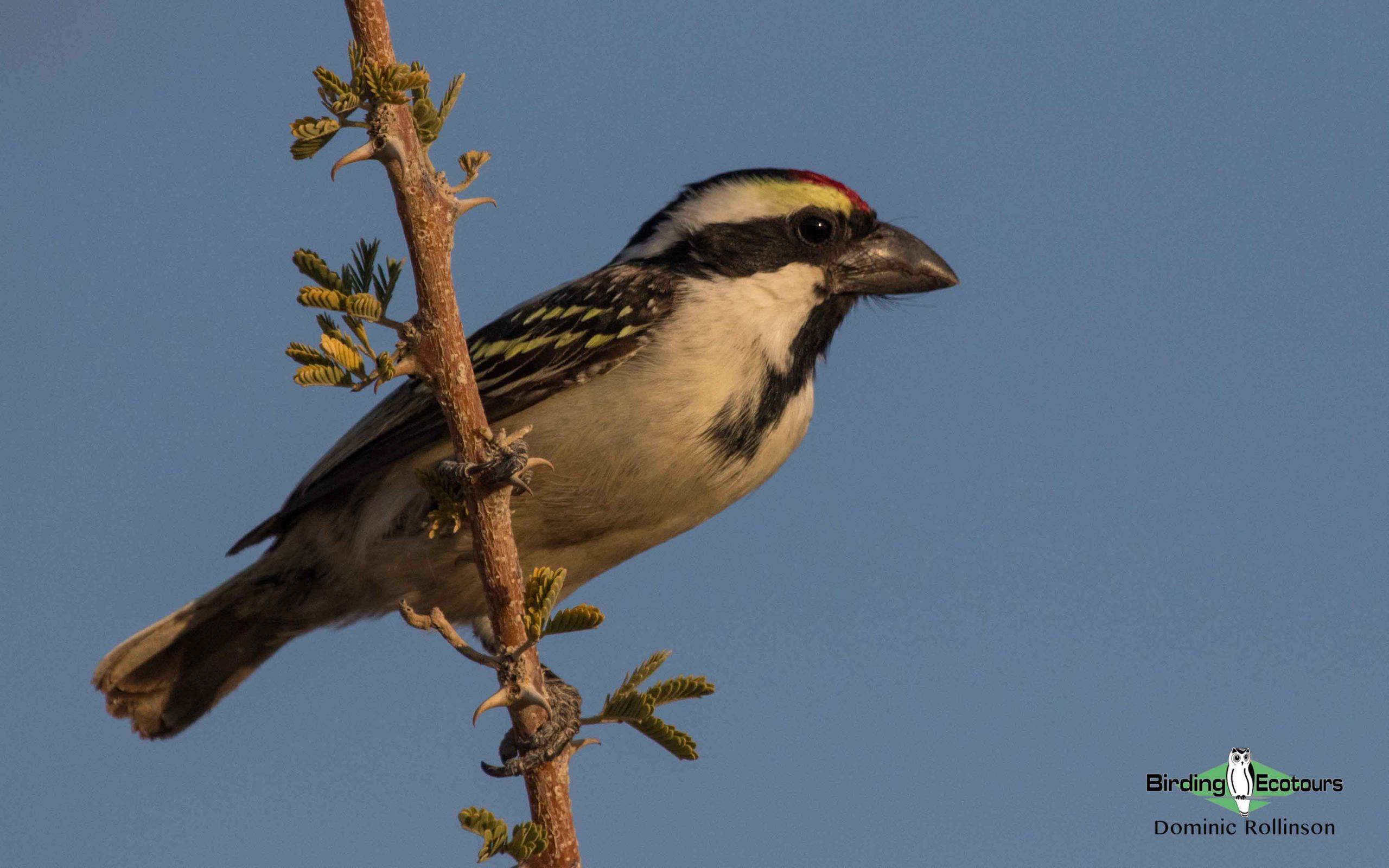 Okavango birding tours