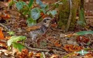Japan birding tour