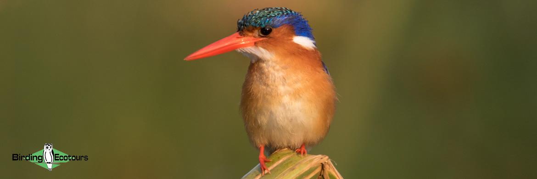Northern Botswana birding tours