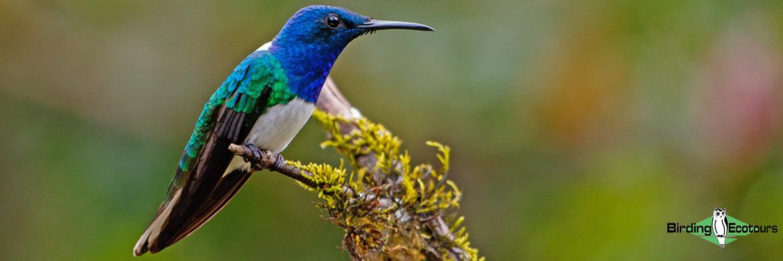 Northern Ecuador birding tours