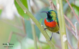 Zambia and Malawi birding tours