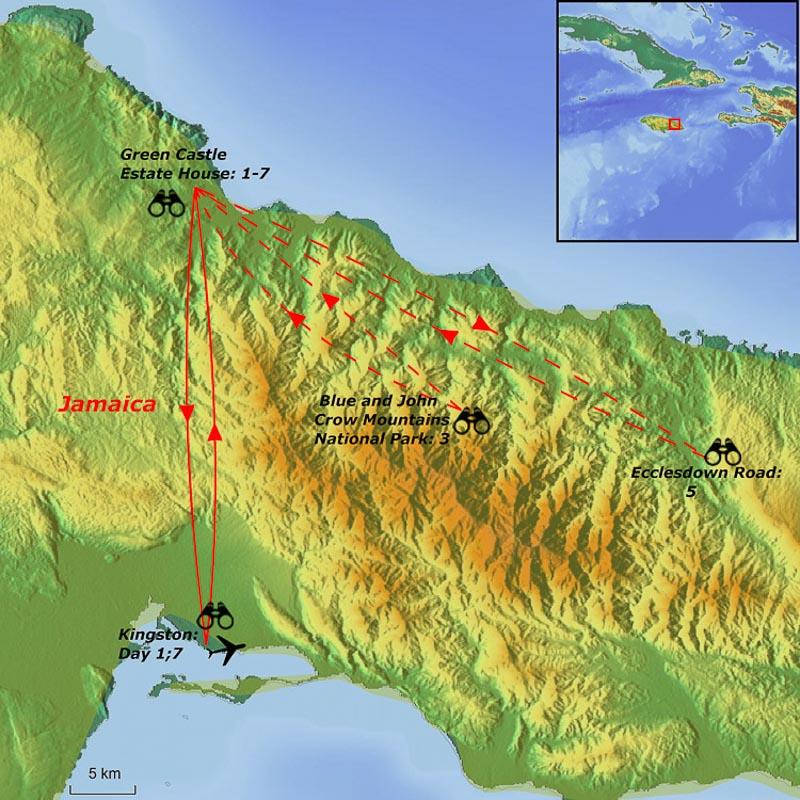 Jamaica birding tours