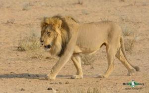 Namibia wildlife safari