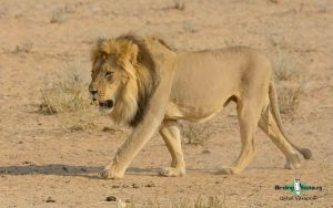 Namibia and Botswana photography tour