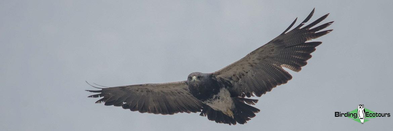 Patagonia birding tours