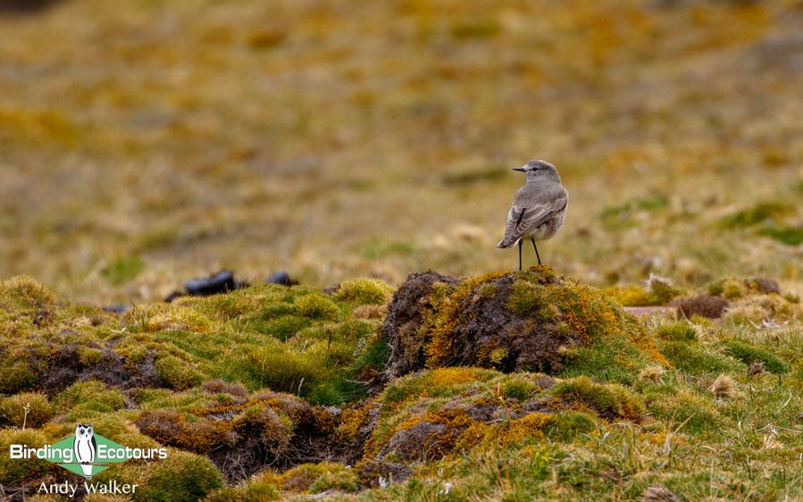 Tierra del Fuego birding tours