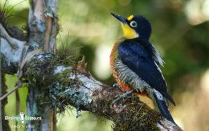 Northeast Argentina birding tours