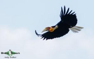 Central Thailand birding tours