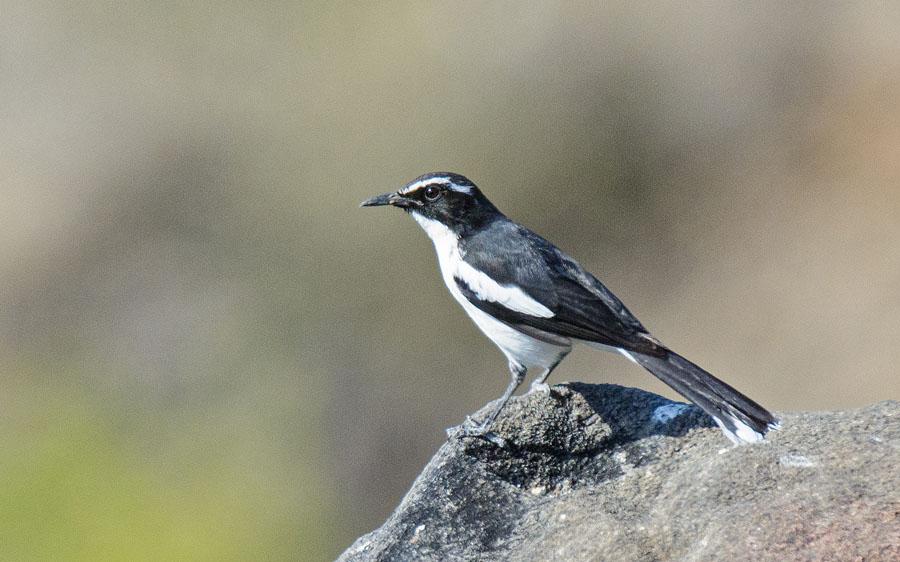 Angola birding tours