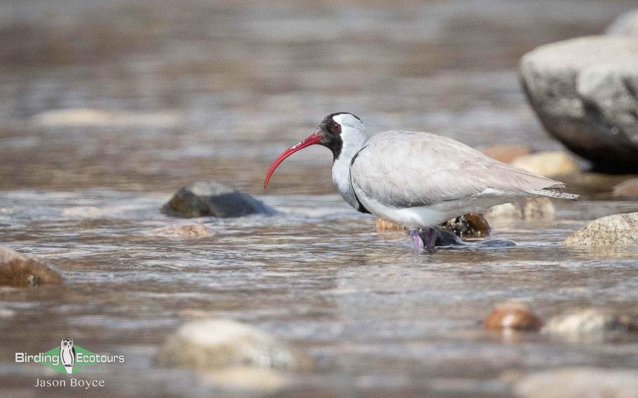 India and Bhutan birding tour