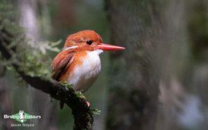 Northwest Madagascar birding tours