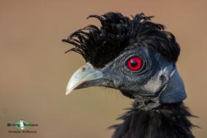 Drakensberg Zululand trip report