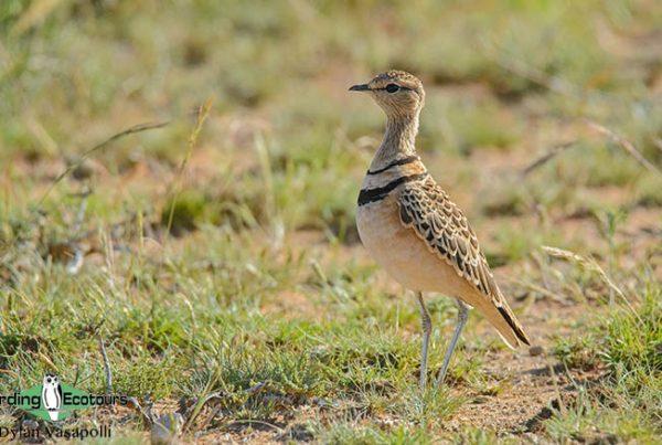 Kalahari trip report