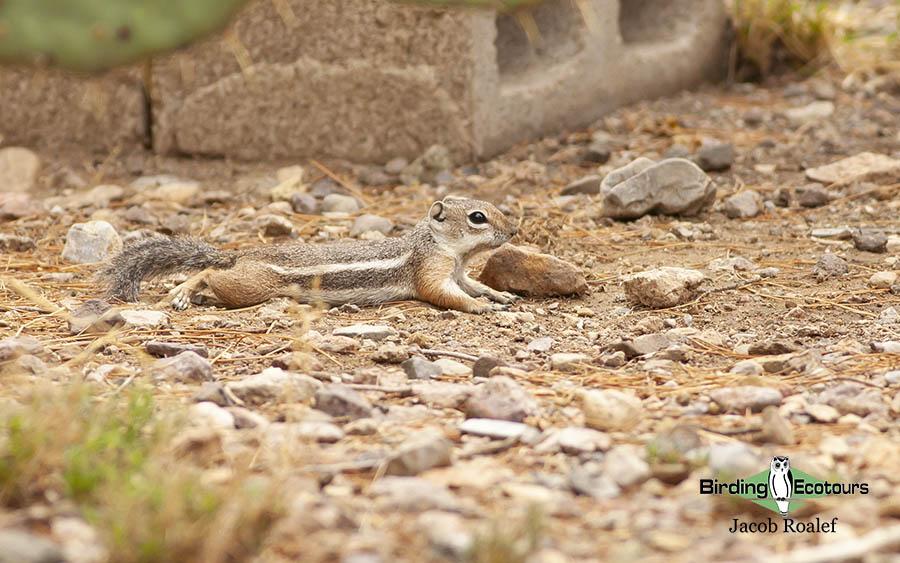 Southeast Arizona birding trip report