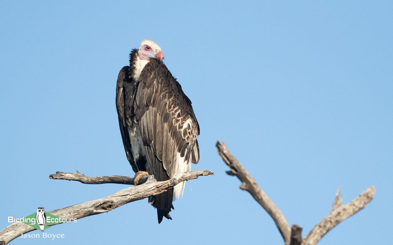 Kruger Escarpment trip report