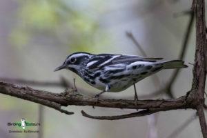 Canada birding tours