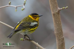 North American birding tours