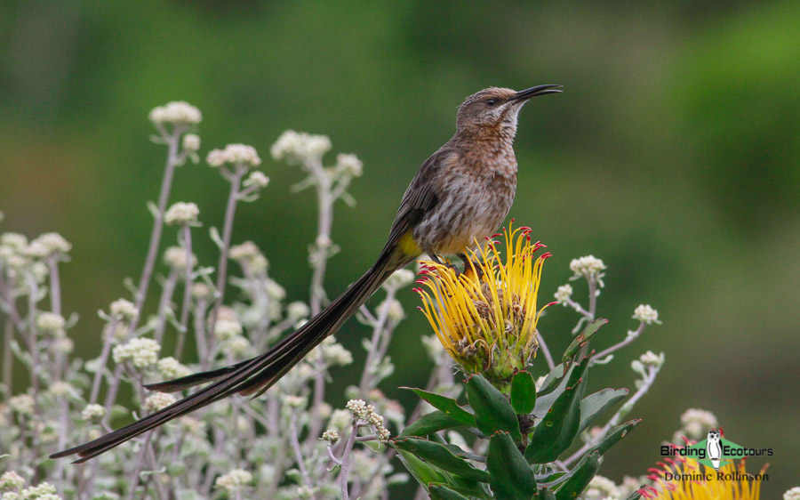 Endemic birds of South Africa