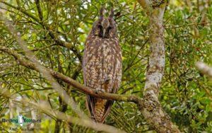 Neotropical birding tours
