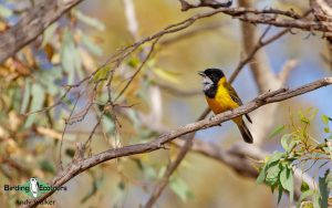 Southwestern Australia trip report