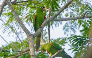 Dominican republic birding tours
