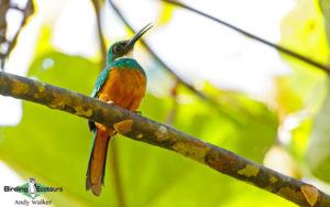 Brazil birding tours