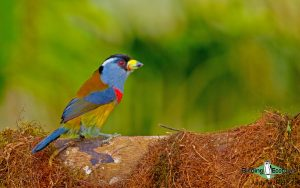 Colombian birding tours
