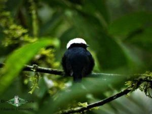 Central Peru trip report