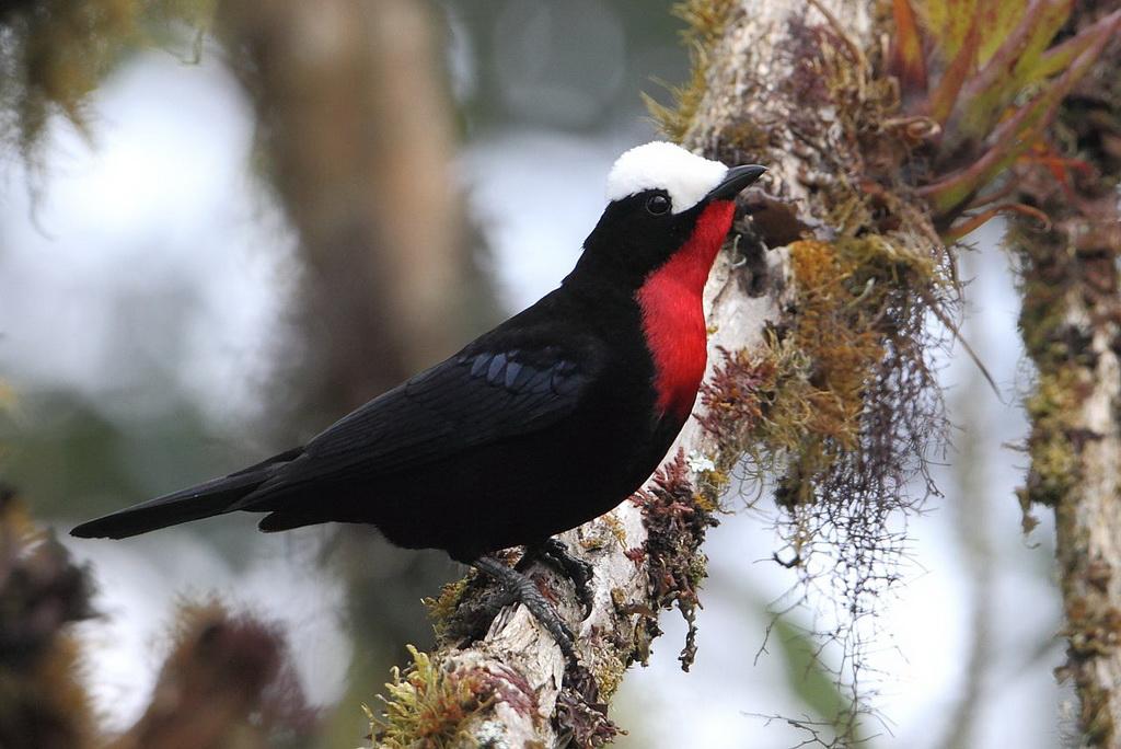 Colombian birding tours