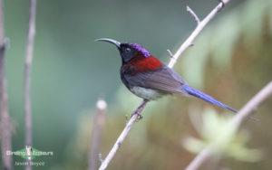 Chinese birding tours