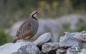 Turkey birding tours
