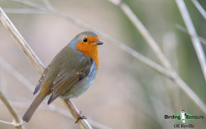 United Kingdom birding tours