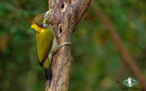 Asian birding tours