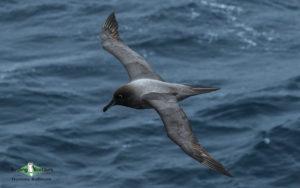 Antarctica birding tours