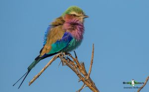 Kruger National Park birding
